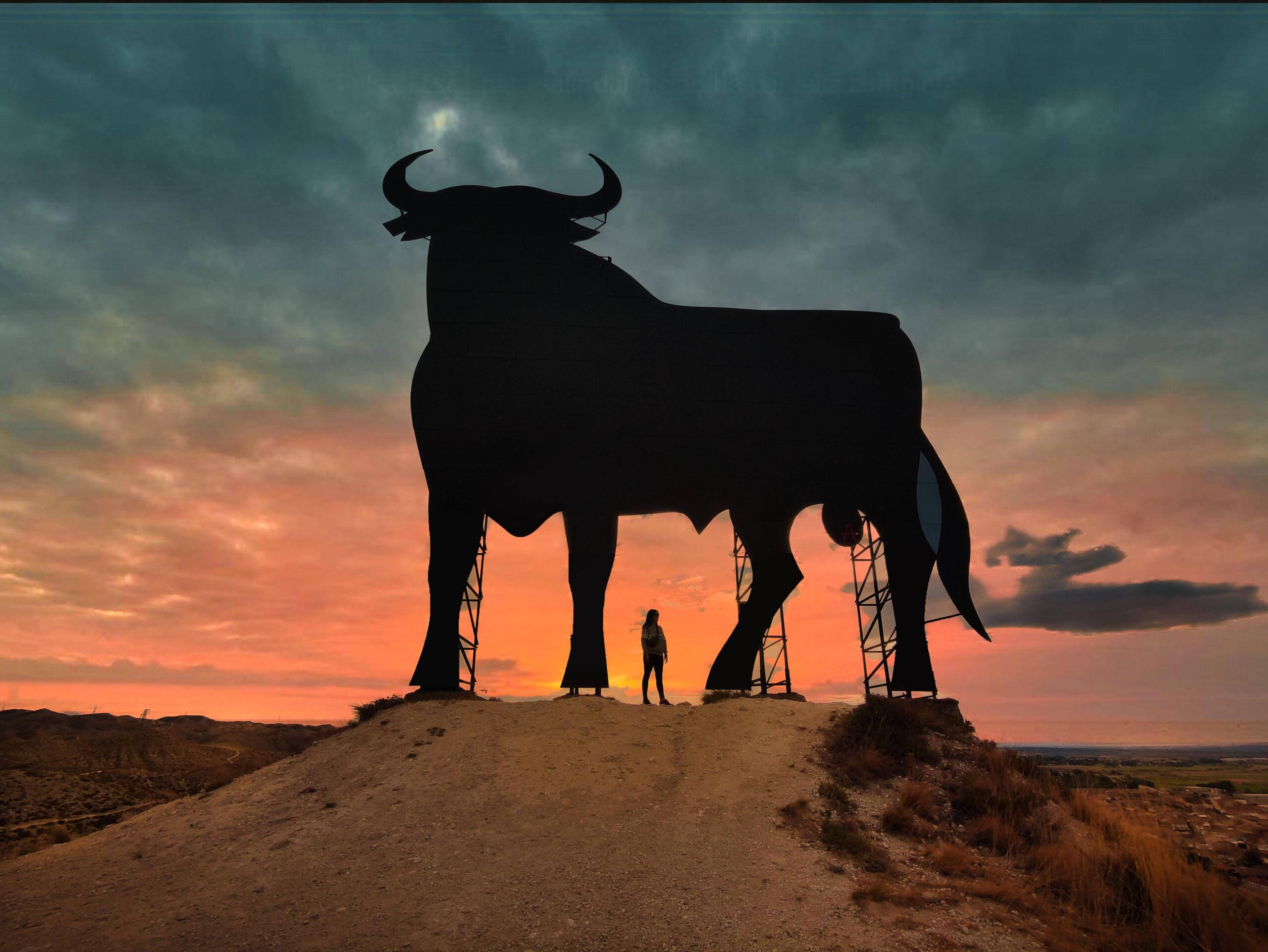 Toro de Alfajarin en Zaragoza- Adrian Sediles Embi